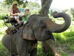 Zeb op de nek van een olifant