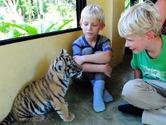 Zeb en Tycho met een tijgertje