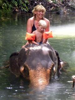 Badderen met een olifant