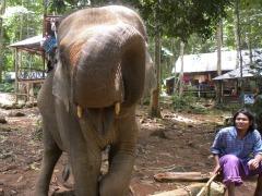 mahout met zijn olifant