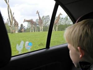 Met eigen auto op safari in Givskud