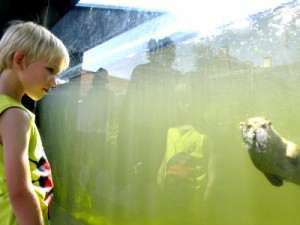 Spelende otter in Ohrada Zoo