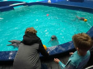 Spelen met dolfijnen in het Dolfinarium