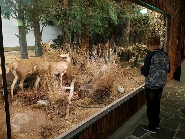 Zeb doet de speurtocht bij bij de Natuurdiorama