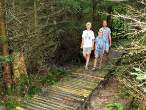 Wandelen in het Bingerwald