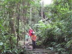 Door de jungle naar de hete bron