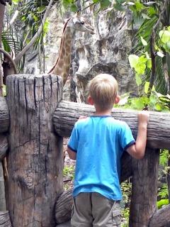 Tycho bekijkt een giraf in Dusit Zoo