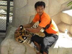 Thaise man met jonge tijger