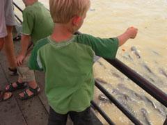 Tycho voert de grote vissen