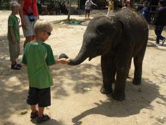 Tycho voert een olifantje