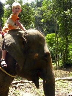 Zeb op de nek van de olifant
