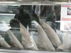 Een etalage vol haaievinnen