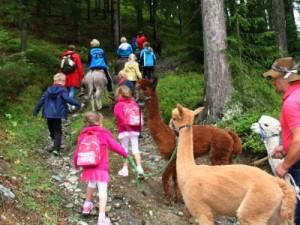 De bossen in met ezels en alpaca's