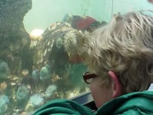 Oostende aquarium