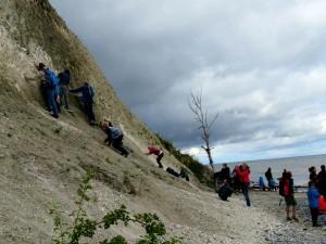Fossielen zoeken op het strand en tegen de krijtrotsen