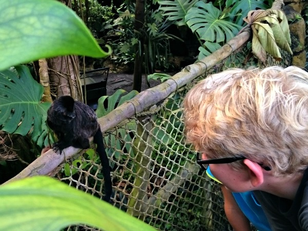 Klein aapje in Randers Regnskov