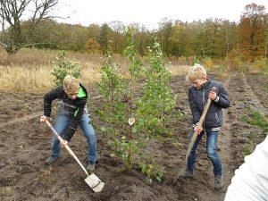boomplantdag bomen planten