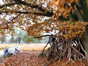 Boomhut in Nationaal Park de Hoge Veluwe
