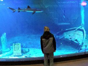 Blue Reef Aquarium bij Deltapark Neeltje Jans