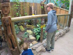 Kaaimannen gespot in Tropical Zoo