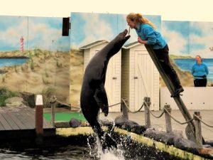 Zeeleeuwshow bij Deltapark Neeltje Jans