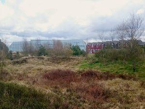 Dayz Seawest by Landal natuur rondom het park