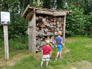 kinderen kijken naar een insectenhotel
