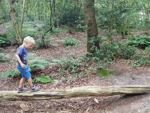 sprietlopen in het bos