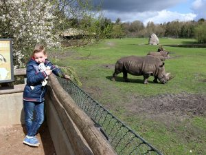 neushoorn en kind in givskud zoo