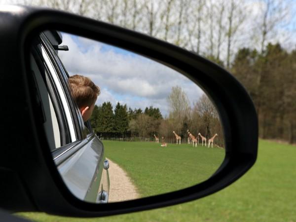 autospiegel met kind en giraffen
