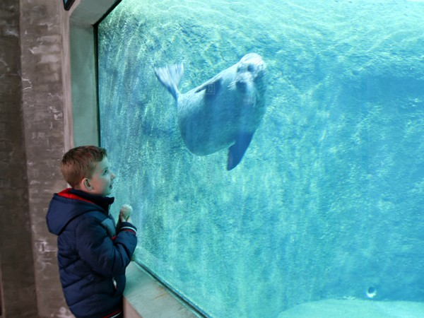 zeehond in het scheepsvaartmuseum in Denemarken