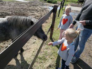 Paarden voeren bij t Olde Manegepeerd