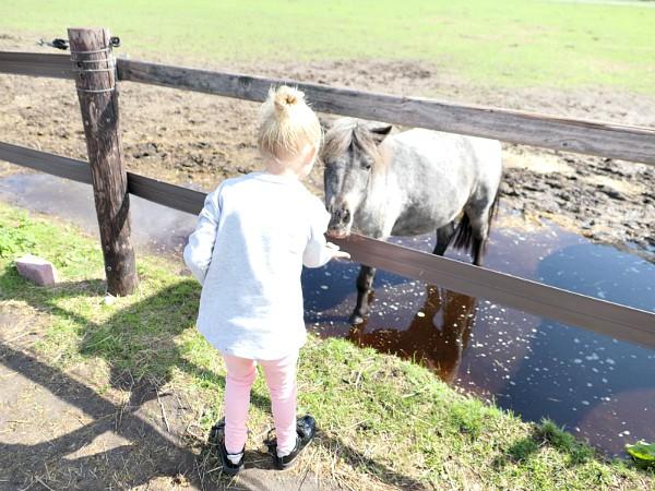 meisje geeft paard eten