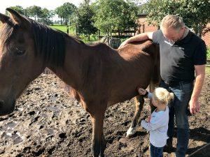We mogen de paarden borstellen