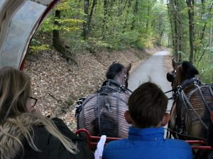 met de huifkar rijden we door de mooie natuur
