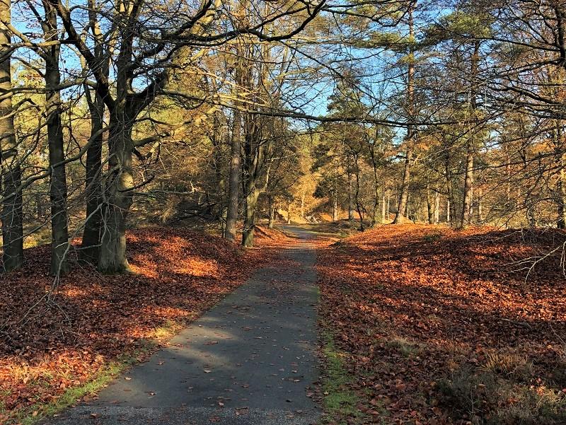 NP Dwingelderveld in de herfst