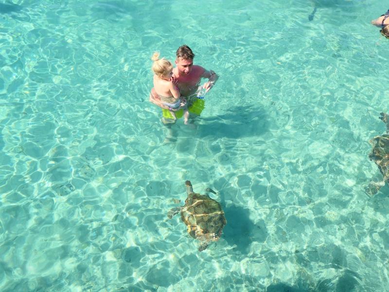 Vader en dochter bekijken schildpad in zee op Curacao