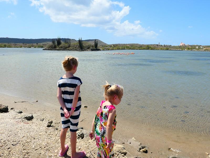 flamingo's kijken bij het meer van Willibrordus