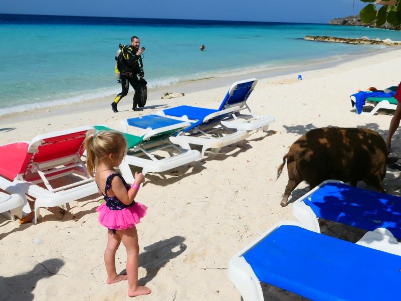 Meisje kijkt naar het varken op het strand van Porto Mari, Curacao