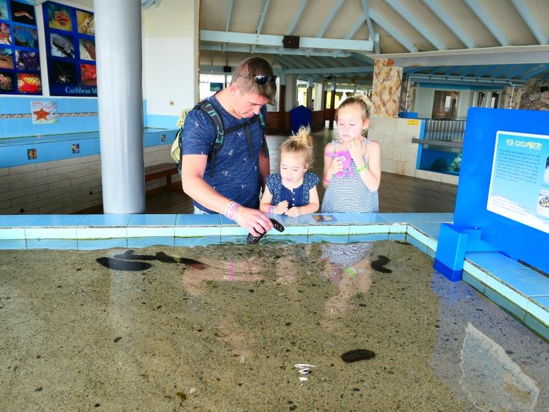 vader en dochters kijken naar een zeekomkommer