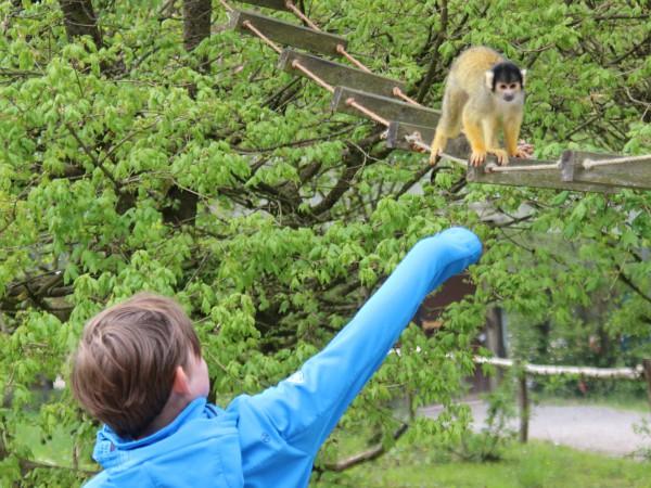 Sven strekt zijn arm uit naar het aapje