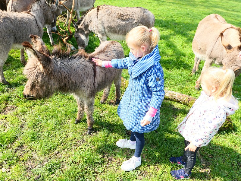 Ezeltje aaien bij safaripark Knuthenborg