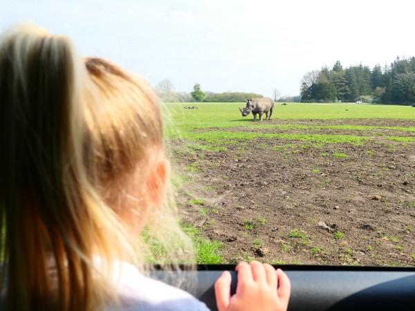 Neushoorntje spotten uit de auto
