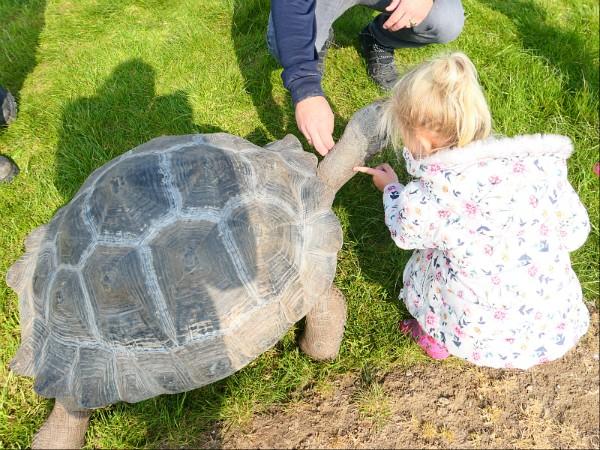Meisje raakt reuze schildpad aan