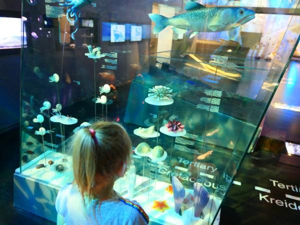 Sanne bekijkt de fossielen in het Geomuseum