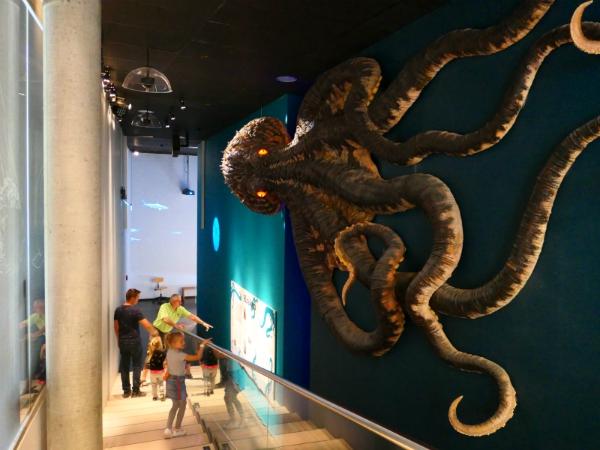 Zo groot kan een octopus worden