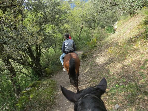 Achter elkaar lopen de paarden door het bos