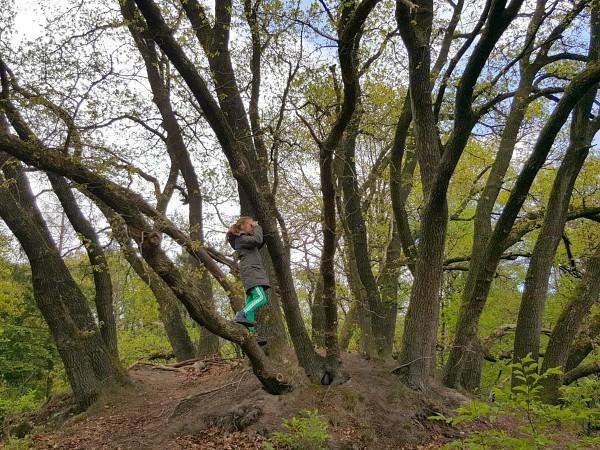 Meisje in het bos bij Landal Rabbit Hill