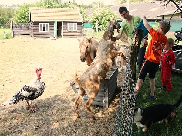 Dieren voeren bij Boerenbed