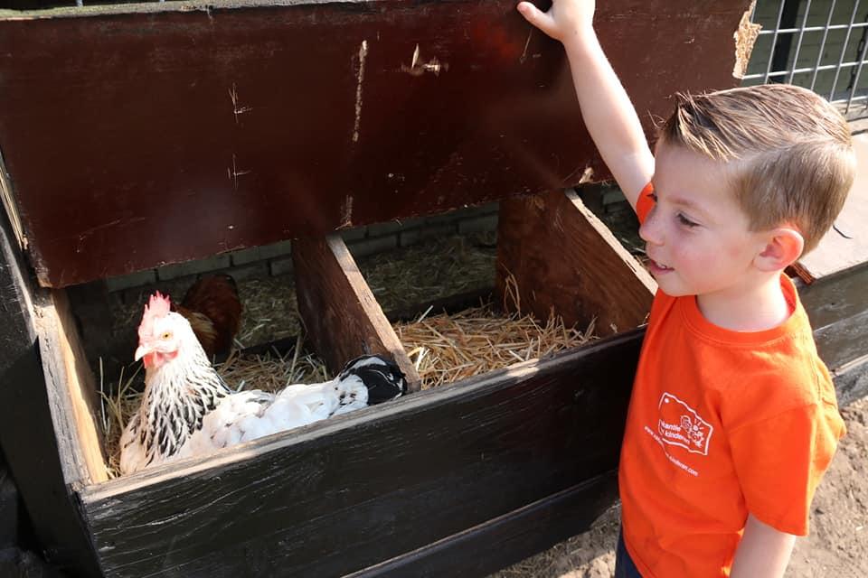Even kijken of de kip al eitjes heeft gelegd voor ons ontbijt...
